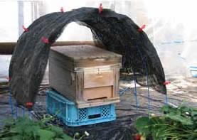 日除けの工夫例。結露による水滴のボタ落ちから巣箱を守る効果もあります