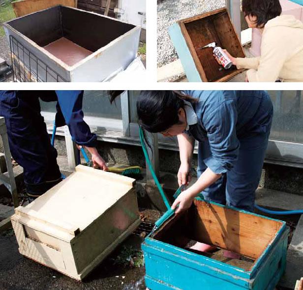 写真提供: 玉川大学ミツバチ科学研究センター 中村純教授