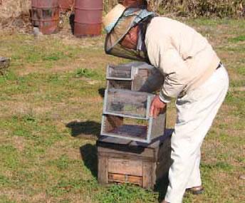 スズメバチ捕獲器を取り付けるところ。写真は( 株)杉養蜂園・桃山和彦氏。
