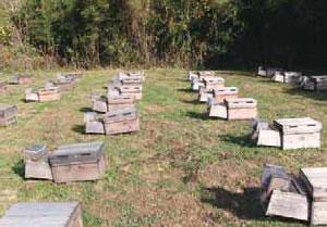 スズメバチ補殺器を設置した巣箱。写真は(株)杉養蜂園養蜂場。
