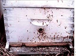 ノゼマ病に感染した群は、巣箱が糞で汚れることが多いとされます。写真提供: アメリカ農務省